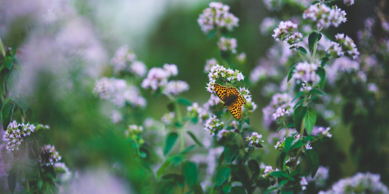 butterfly-791487_1280